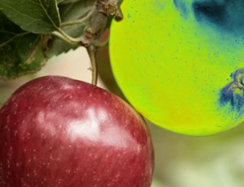 Fruit Biometry